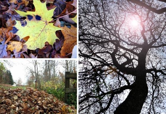 autumn_2015_edited-1